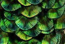 Colors and Textures - Green / by Tracy Potter