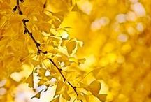 Colors and Textures - Yellow / by Tracy Potter