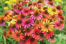 Floral Arrangements / by Caroline Harris