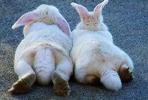 bunny love / by Caroline Harris