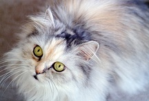 Cats IV / Cat pictures / by Sharon Thompson