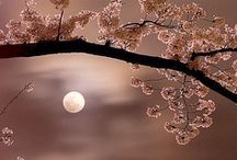 """I Love the Moon / """"I never really thought about how when I look at the moon it;s the same moon as Shakespeare and Marie Antoinette and George Washington and Cleopatra looked at.""""  ― Susan Beth Pfeffer / by Caroline Harris"""