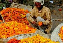 All Things Marigold