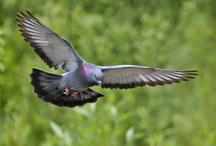 Birds and Science / by Wild Bird Marketing