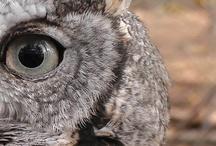 Owls Only / by Wild Bird Marketing