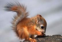 Squirrels & Chipmunks / by Wild Bird Marketing