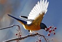 Birds of North America / by Wild Bird Marketing
