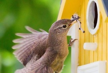 What Birds Eat... / Not just sunflower seeds, birds eat lots of different things, both in our feeders and in the wild. These include peanuts, insects safflower seed and more! / by Wild Bird Marketing