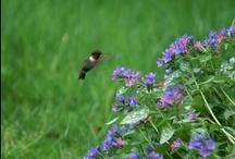 Migration / by Wild Bird Marketing