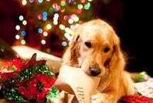 Pets / setter y otras razas de perros como mascotas