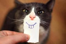 Cat Funnies / by Nina