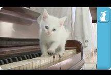 Kittens? Kittens! / Small. Adorable. Feline.