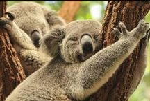 Voyager en Australie / Inspiration, récits et conseils pratiques pour voyager en Australie