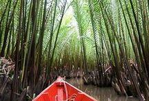 Voyager au Cambodge / Récits, carnets de voyage, photo, inspiration et conseils pratiques pour préparer votre prochain voyage au Cambodge.