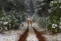 Seasons-Winter / by Annie Horn