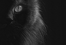 LOve black animals