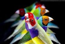 Pretty Bird! / by Angie Canales
