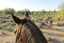 Arizona / Arizona from a horse lovers perspective. Scottsdale is the west's most western town.