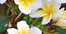 Gardening / 花の写真を集めました。