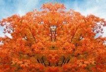 Autumn / by Ruthanne Willard