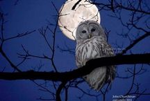 Owls / by Ruthanne Willard
