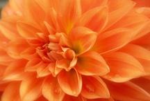 Flowers / by Ruthanne Willard