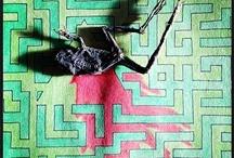 Bromvliegen / by G. Pipo