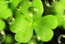 """The Wearing of the Green / Crossville celebrates St. Patrick's Day–                                          """"If you're enough lucky to be Irish, you're lucky enough!"""""""
