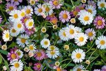 Gartentipps & Pflanzen