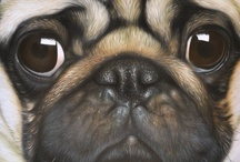 Pugs / by Dee Huffman-Weathers