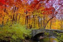 Winter/Autumn Photography