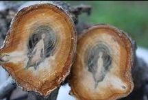 ΨΨΨ Tree Scapes ΨΨΨ / Wood, Roots, Limbs, Leaves, Bark, Forrests... Security. / by Scorpio 333