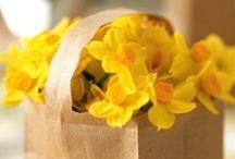 Easter and Springtime / by Ashli Welsh