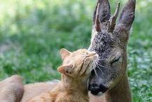 Unusual furry friendships