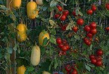Gardening Inspiration / by Karleigh Ferre'