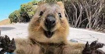 Funny animals / About having fun and a very long laugh