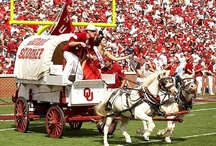 Sooner Swag / by Hibbett Sports®