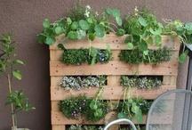 Verticaal tuinieren // Vertical gardening / Ideeën voor verticaal tuinieren // ideas for vertical gardening.   Ideaal voor kleine tuinen of stadstuinen! / by Tuinieren.nl