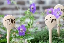Plantenlabels // Plant markers / Onthouden welke planten je gezaaid hebt? Gebruik plantenlabels! // DIY's for plant markers.  / by Tuinieren.nl
