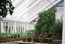 Greenhouse envy / In the land of someday my wonderful, talented, gifted, amazing, stupendous, selfless, giving, amazing, (oh shoot I said that already), husband  will build me one of these greenhouses and I will be forever, eternally grateful and give him my undying love and support. / by Shari @ Pure Grace Farms
