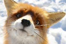 Animal Kingdom / Because who doesn't like looking at beautiful animals!  / by Sarah Jordan
