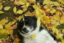 Autumn / by Ana Vasiljevic