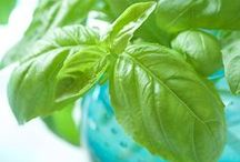 Fresh Herbs / The wonderful world of Herbs - From growing them to cooking with them!