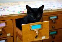 Bookstore Cats (≡•̀ꈊ•́≡)