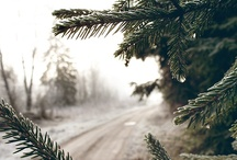 winter /  I was sad that we could not stay longer and see the snow fall and the air explode from our lungs on a frosty day.  ~~ Peter Dewitt