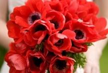 Wedding Floral / wedding flower ideas / by A Chair Affair, Inc.