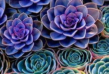 Succulents / by Kathleen Clemmons