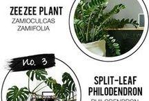 houseplants / Houseplants