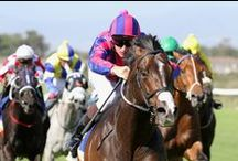 The Sport of Kings / South African thoroughbred breeders and their champion horses are blazing a trail in the international racing stakes.  See full article on The King of Sports on our Opulent Living website at www.opulentliving.co.za