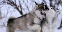 Doggie wīsdōm / Best advice for canine care #Dog #Dogs #Hund #Hound #canine